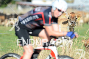 An age grouper athlete and a cow in the field get curious, 2013 Ironman New Zealand, Lake Taupo New Zealand, March 2 2013.