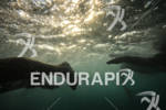 An underwater view of swimmers in the Ford Ironman World…