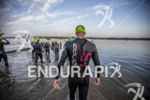 Andrew Starykowicz entering water at the 2013 Ironman Muncie 70.3…