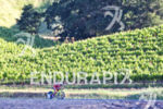 Holly Lawrence on the vineyard filled bike course at the…